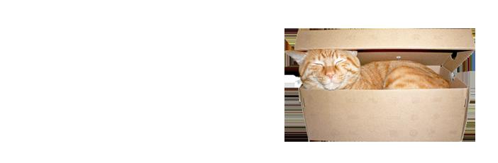 藤川建設の猫です